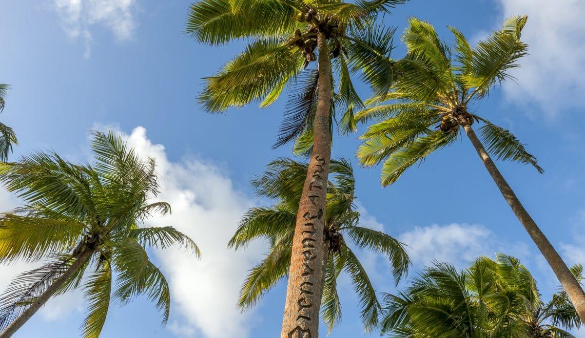 Vue des Cocotiers sur une plage de Lifou dans l'archipel des îles Loyauté en Nouvelle-Calédonie